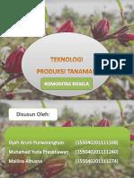 Teknologi Produksi Tanaman Rosela