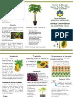 TRIPTICO-cultivo de Papaya