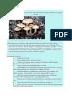 335582973-Soal-Fungi-1.doc