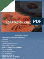 Adaptacion Celular Med-10