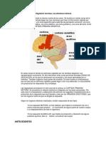 Cerebro y Los Diferentes Sistemas de Conexion Nerviosa de Integración Nerviosa