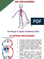 Sistema Circulatorio 7 Grado