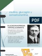 Insulina, Glucagón y Somastostantina