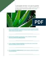 Los 7 Beneficios Principales Del Aloe Vera Para La Gastritis