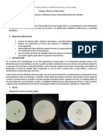 Informe 1. Microbiología