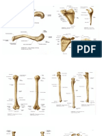 anatomi print.docx