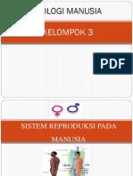 Ppt Sistem Reproduksi Manusia