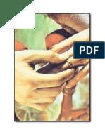 Mi guk kwan gup manualpdf sports manualul mirilor sacramentul pdf fandeluxe Images