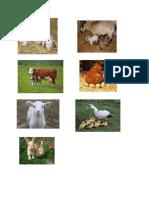 farm animals.docx