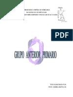 3- Grupo Anterior Primario