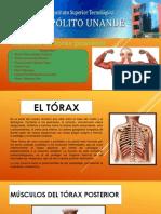 El_tórax[1]