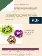 Microorganismos Presentes en Los Mariscos
