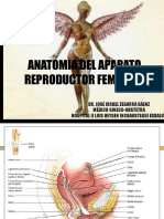 Clase 1 - Anatomia en Ginecologia