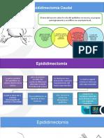 Epidididectomia Andre Autoguardado