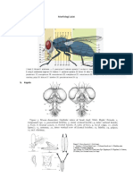 Morfologi Lalat 1.docx