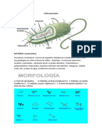 Célula procariota.docx