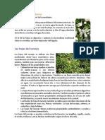 plantas medicinas