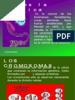 genetica-1233152072331292-3