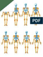Esqueleto -