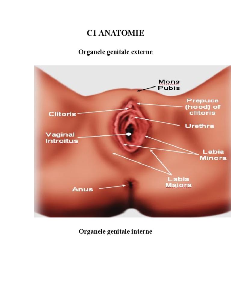 Clitoris - Wikipedia