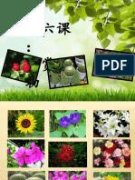 tanaman hiasan.pptx