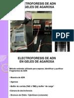 electroforesisDNA