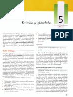 Tejido Epitelial  Histologia UACh