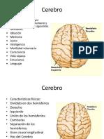 Cerebro Neurobiología