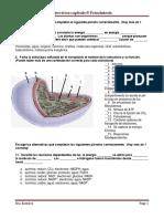 Ejercicios Fotosintesis.pdf