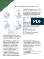 Quiz - Virus Bacterias e Protistas