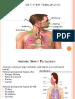 Anatomi Sistem Pernapasan PPT