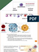 células-sanguíneas