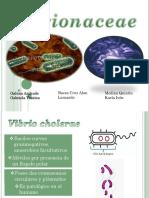 EXPO Vibrionaceae