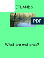 Basic Wet land
