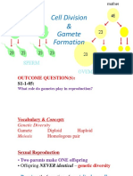 2 - Cell Division - Gamete Formation1