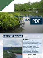 Fisiorep Mangrove