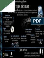 avispa de mar 2