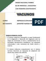 vacunos