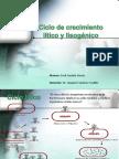 Ciclo lítico y lisogénico virus