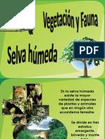 Vegetació Ny Fauna 1