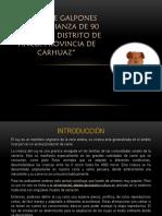 Presentacion 90 Cuyes.pptx