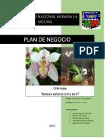 Plan de Negocio, Orquideas en Kokedamas