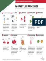 SOG DG6 Summary of Key Life Processes 5p2