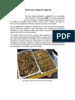 Ladrillo Con Colillas de Cigarrillo