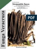 163 Stemonitis Fusca Funga Veracruzana
