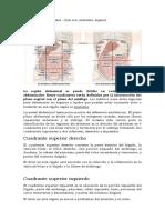 Cuadrantes abdominales.docx