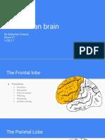 the  human brain sebastian sulecio