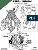 Insecto-abejaypiezas.pdf