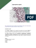 histovegetal3 (1).pdf