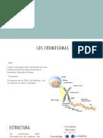 Tarea 10 Diapositivas Biologia